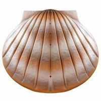 Shell Biodegrable Urn Sand