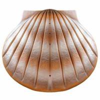 Shell Biodegrable Urn Sand