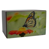 Watercolor Painting Butterfly Urn